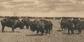 Old Monarchs of the Plains, 1907
