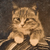 [Cat posed with Mexican serape], ca. 1862 – 1868